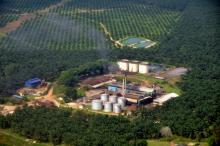 Olio di palma: iniziative Ue contro deforestazione illegale