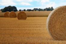 Agricoltura: biodiversita', successo PAC dipende da implementazione