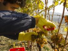 Agricoltura: Ue, PAC sostiene ricambio generazionale
