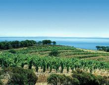 Bando da 15 milioni, arrivano i contributi per 57 imprese agricole e agroalimentari