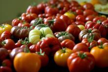 Ogm: ok a divieto coltivazione in Italia