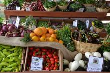 Pe: ComAgri, ok ad avvio negoziati su agricoltura biologica