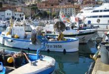 Fondi pesca, Toscana chiede di raddoppiare l'intervento per i Flag della costa
