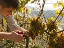 Pac - Ue pronta a sostenere giovani agricoltori