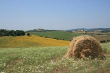 Agricoltura, progetti integrati territoriali domande prorogate