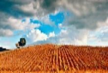 Agricoltura, Remaschi: ''Garanzie gratuite al 50% per sostenere investimenti e innovazione del settore''