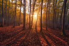 Biodiversita': Ue, necessari obiettivi piu' ambiziosi