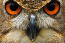 Natura: partecipazione record a consultazione Ue