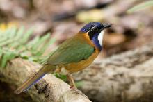 Natura: plenaria difende direttive Habitat e Uccelli