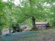 Programme de développement rural 2014-2020: Le Plan de développement rural de la Corse (PDRC) est approuvé