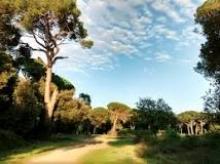 La festa dell'albero, un convegno a San Rossore
