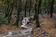 Giunta approva pacchetto di interventi per la cura e la valorizzazione delle foreste
