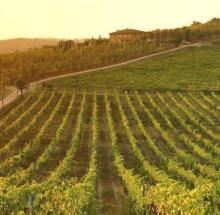 Scheda, il rapporto sui vini in Toscana nel 2017