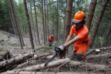 """Operai forestali, Remaschi: """"Regione mantenuto gli impegni, sindacati sbagliano ad annunciare scioperi"""""""
