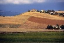 Agricoltura, oltre 70 milioni di pagamenti già disposti da ARTEA per anticipi sulla PAC