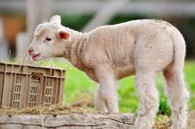 Agricoltura: Pe, no ad animali clonati e prodotti derivati