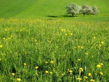 Agricoltura: risultati in crescita da una PAC piu' verde