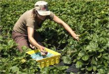 Agricoltura: riforma PAC punta ad affrontare insicurezza alimentare