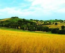 """Paesaggio, Rossi: """"In Toscana non vogliamo condoni"""""""