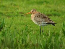 Biodiversita': consultazione su direttive Uccelli e Habitat