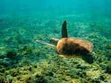 """Successo del bando """"Go green 2018, biodiversità marina"""": sono 7 i progetti finanziati"""