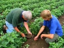 Anticipi Pac, liquidati 10 milioni di euro alle imprese agricole