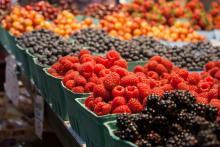 Agroalimentare: esportazioni Ue in aumento nel 2014